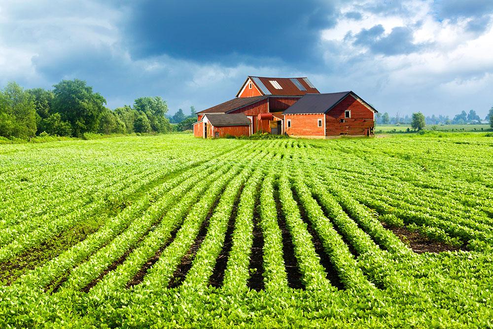 аренда земельных участков сельскохозяйственного назначения