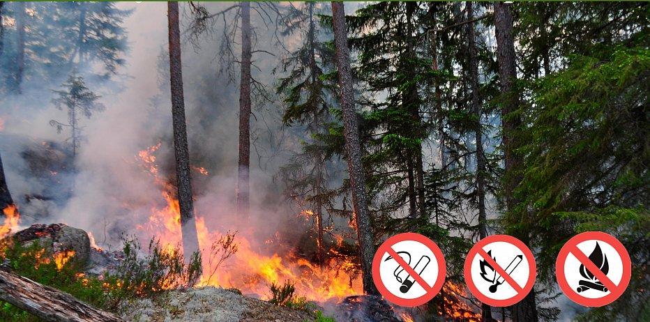По 27 июля в лесу сохранится чрезвычайно высокая пожароопасность ...
